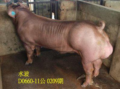 台灣動物科技研究所竹南檢定站10209期D0660-11拍賣相片