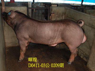 台灣動物科技研究所竹南檢定站10209期D0411-03拍賣相片