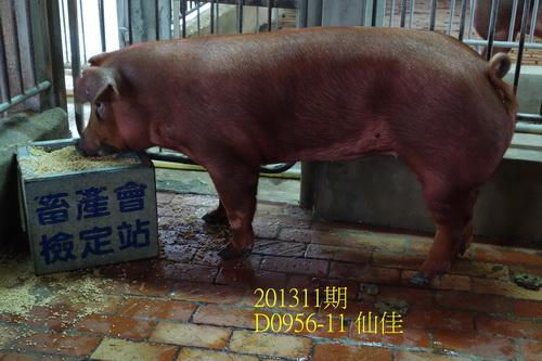 中央畜產會201311期D0956-11拍賣照片