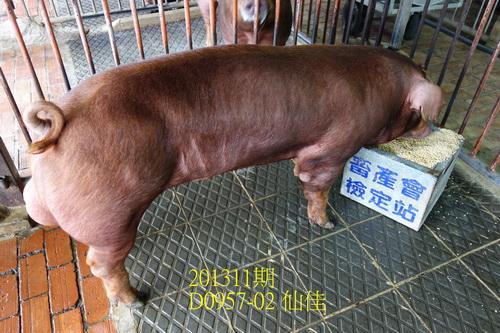 中央畜產會201311期D0957-02拍賣照片