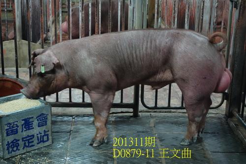 中央畜產會201311期D0879-11拍賣照片