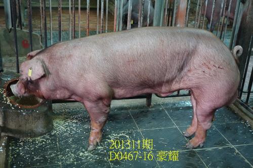 中央畜產會201311期D0467-16拍賣照片