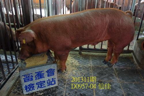 中央畜產會201311期D0957-04拍賣照片