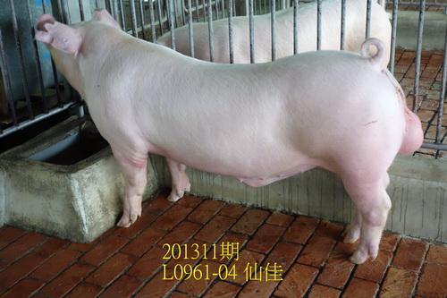 中央畜產會201311期L0961-04拍賣照片