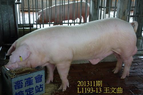 中央畜產會201311期L1193-13拍賣照片