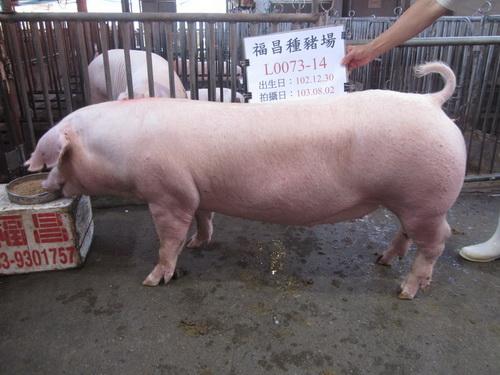 台灣區種豬產業協會10307期L0073-14側面相片