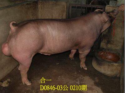 台灣動物科技研究所竹南檢定站10210期D0846-03拍賣相片