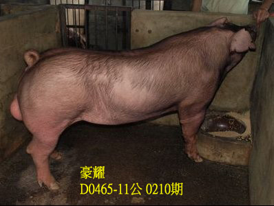 台灣動物科技研究所竹南檢定站10210期D0465-11拍賣相片