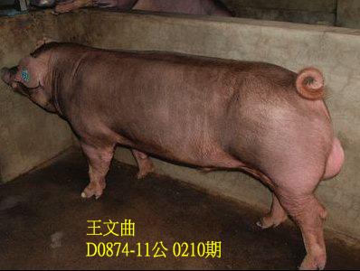 台灣動物科技研究所竹南檢定站10210期D0874-11拍賣相片