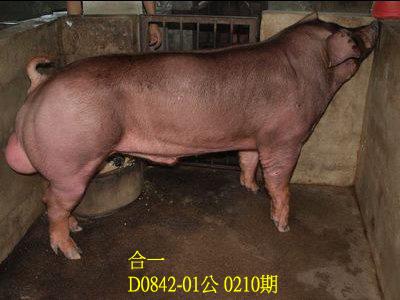 台灣動物科技研究所竹南檢定站10210期D0842-01拍賣相片