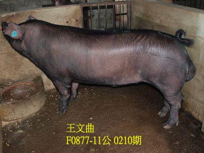 台灣動物科技研究所竹南檢定站10210期F0877-11拍賣相片