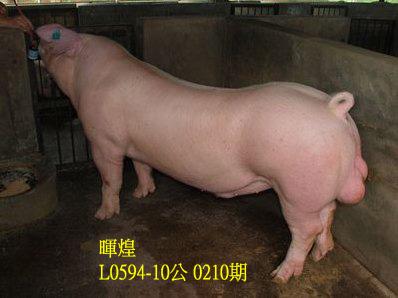 台灣動物科技研究所竹南檢定站10210期L0594-10拍賣相片