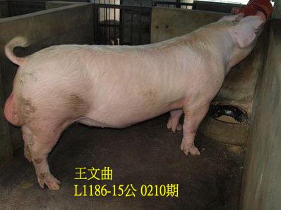 台灣動物科技研究所竹南檢定站10210期L1186-15拍賣相片