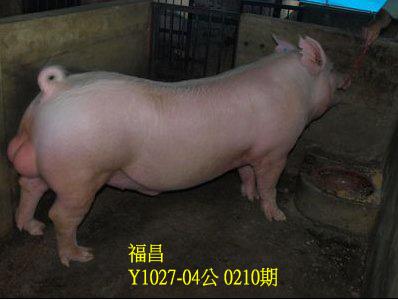 台灣動物科技研究所竹南檢定站10210期Y1027-04拍賣相片