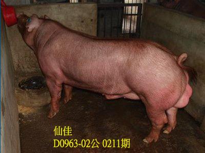台灣動物科技研究所竹南檢定站10211期D0963-02拍賣相片