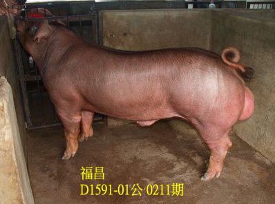 台灣動物科技研究所竹南檢定站10211期D1591-01拍賣相片