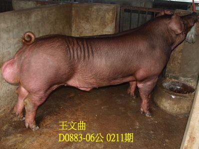 台灣動物科技研究所竹南檢定站10211期D0883-06拍賣相片