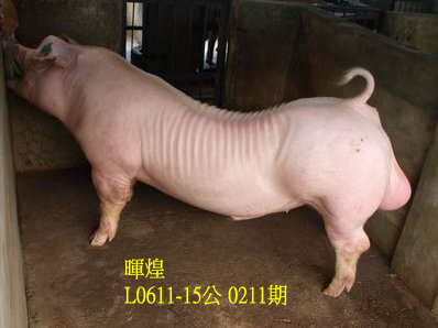 台灣動物科技研究所竹南檢定站10211期L0611-15拍賣相片