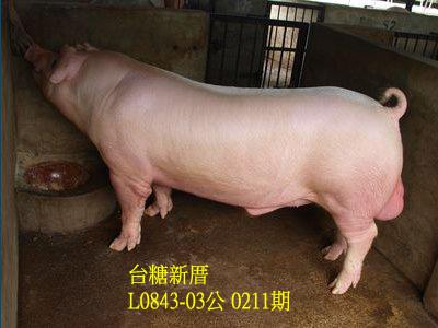 台灣動物科技研究所竹南檢定站10211期L0843-03拍賣相片
