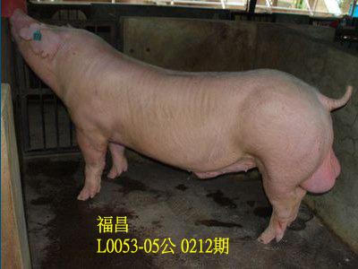 台灣動物科技研究所竹南檢定站10212期L0053-05拍賣相片