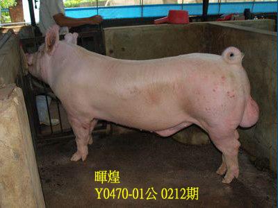 台灣動物科技研究所竹南檢定站10212期Y0470-01拍賣相片