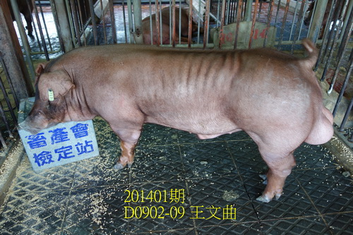 中央畜產會201401期D0902-09拍賣照片