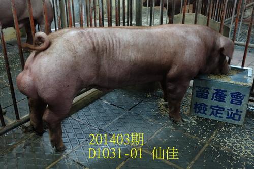 中央畜產會201403期D1031-01拍賣照片