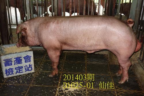 中央畜產會201403期D1025-1拍賣照片