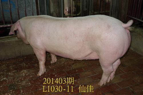 中央畜產會201403期L1030-11拍賣照片