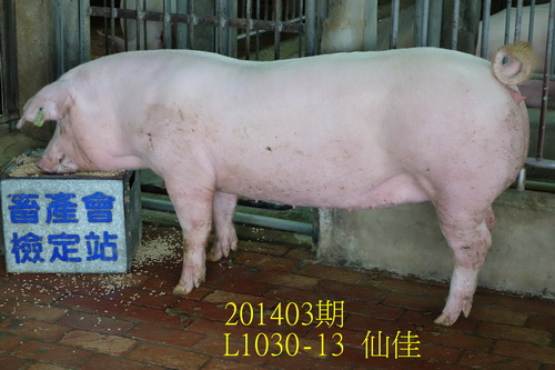 中央畜產會201403期L1030-13拍賣照片