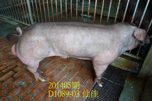 中央畜產會201405期D1089-03拍賣照片