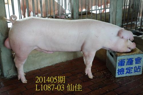 中央畜產會201405期L1087-03拍賣照片