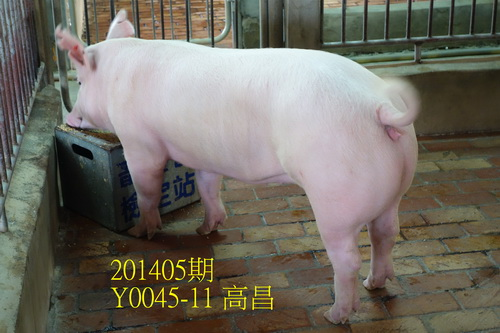 中央畜產會201405期Y0045-11拍賣照片