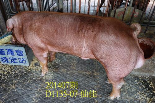 中央畜產會201407期D1135-07拍賣照片