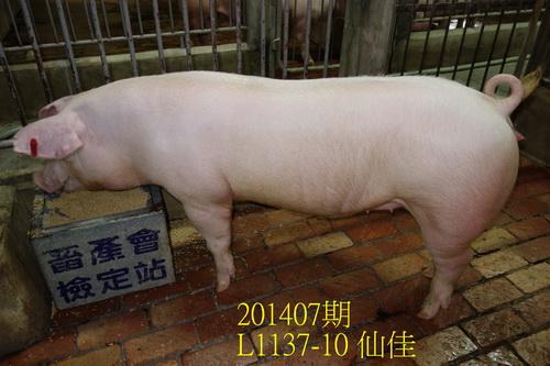 中央畜產會201407期L1137-10拍賣照片