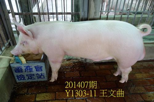 中央畜產會201407期Y1303-11拍賣照片