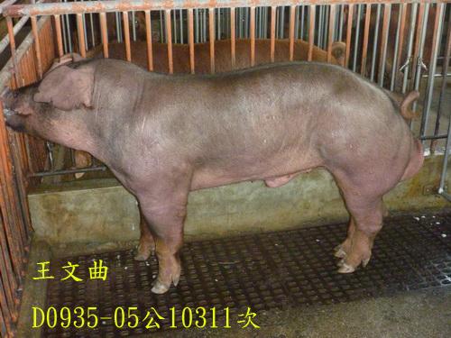 台灣區種豬產業協會10311期D0935-05側面相片