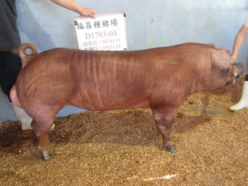 台灣區種豬產業協會10311期D1783-04側面相片