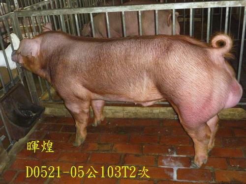 台灣區種豬產業協會場內檢定103T2次D0521-05側面相片