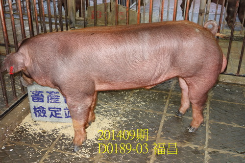 中央畜產會201409期D0189-03拍賣照片