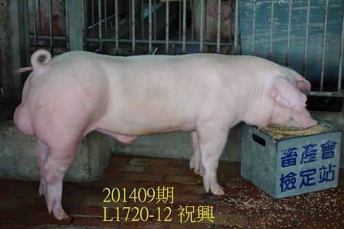 中央畜產會201409期L1720-12拍賣照片