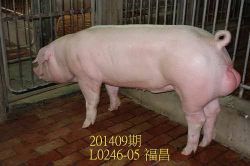 中央畜產會201409期L0246-05拍賣照片