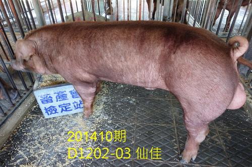 中央畜產會201410期D1202-03拍賣照片