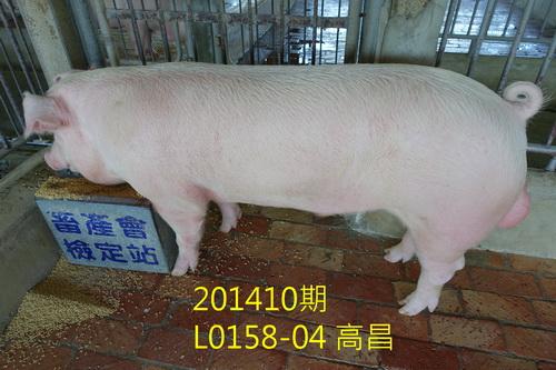 中央畜產會201410期L0158-04拍賣照片
