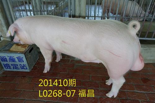 中央畜產會201410期L0268-07拍賣照片