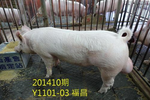中央畜產會201410期Y1101-03拍賣照片