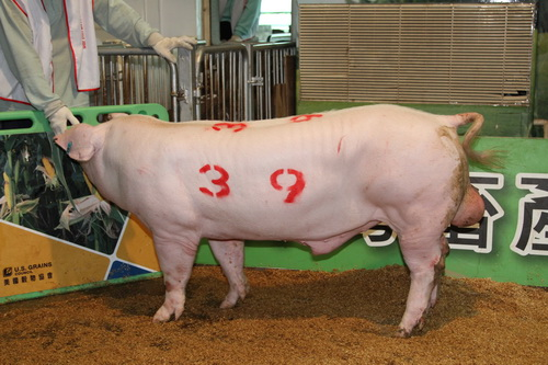 中央畜產會201405期L1669-10拍賣照片(高價豬)