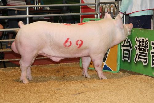 中央畜產會201404期Y1259-12拍賣照片(高價豬)