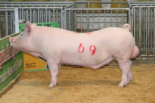 中央畜產會201407期Y1077-04拍賣照片(高價豬)