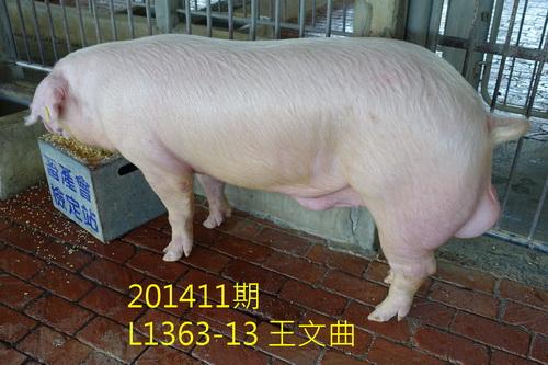 中央畜產會201411期L1363-13拍賣照片